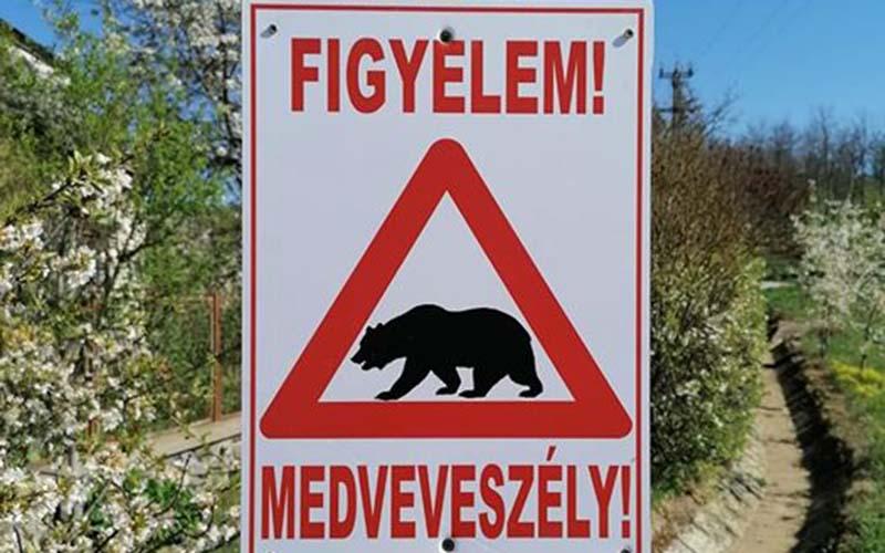 Nyikom medveveszély